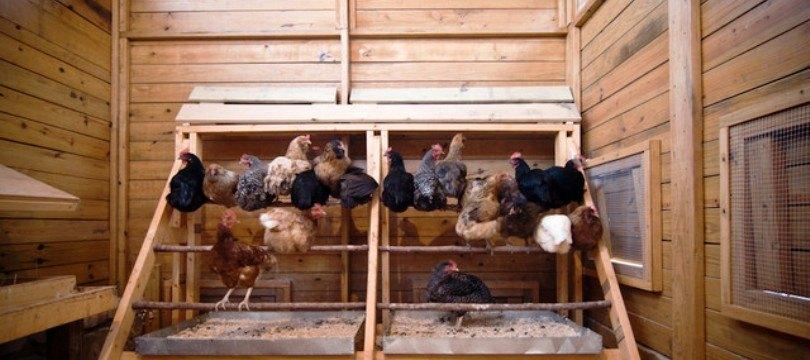 Admirable Perchoir pour poules pondeuses | Meilleur Poulailler QP-87